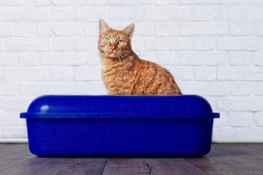 Cat Litter Box 101 – Maintenance, How Often, and How To Clean