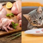 can-cats-eat-raw-chicken