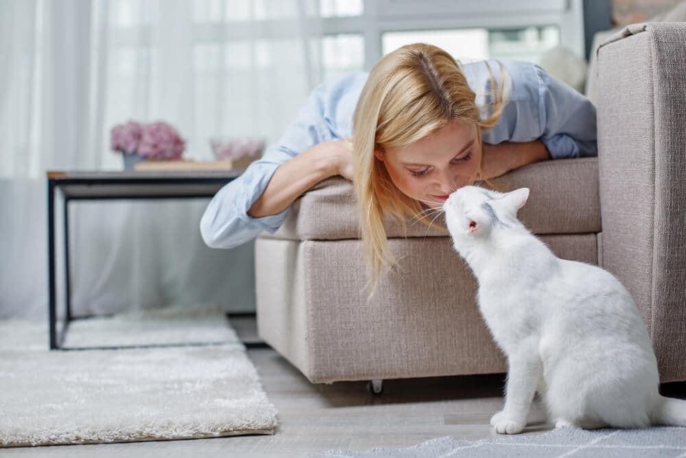 cat-friendly-environment
