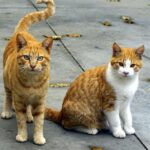 how-long-can-cats-go-without-food-and-water