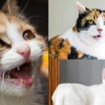 why-do-cats-leave-their-mouth-open