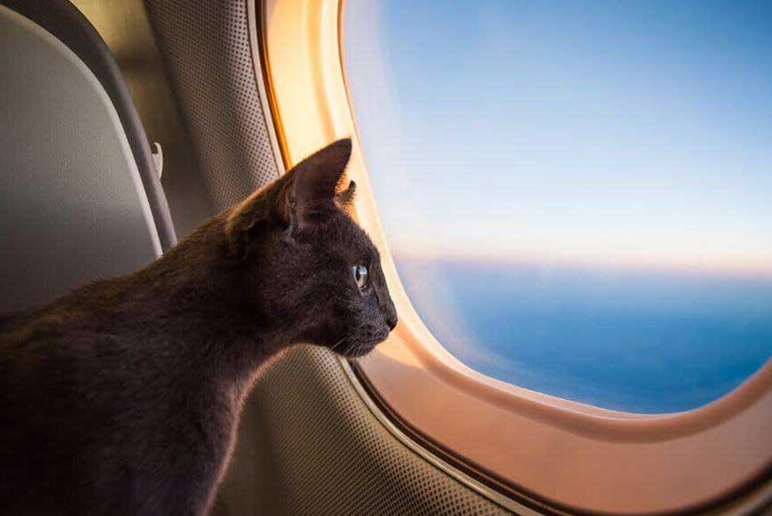 cat-travel-in-air