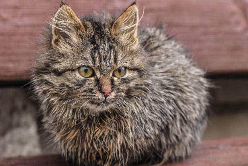 dry-heaving-in-kittens