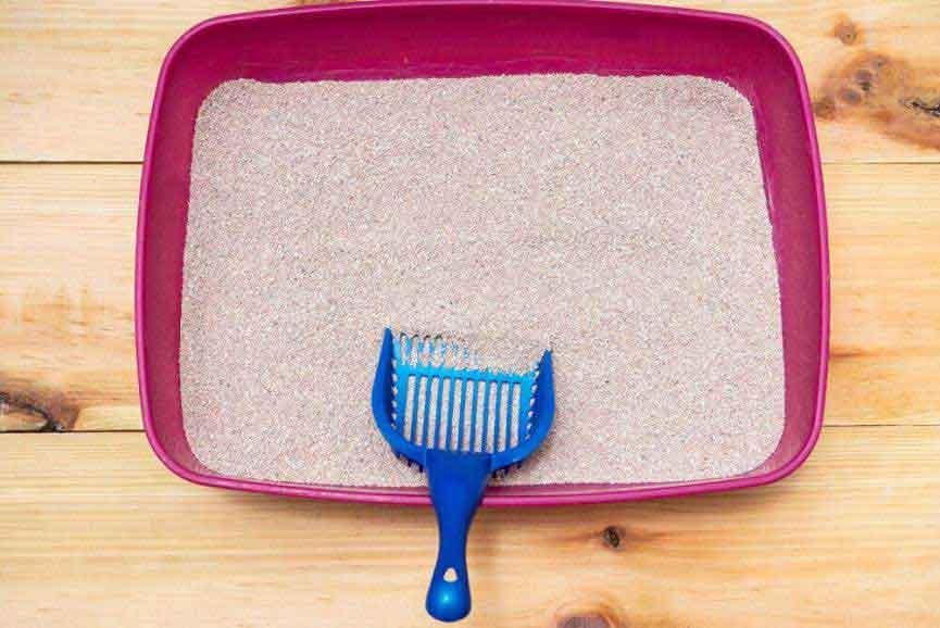 Cat Litter Box 101 – Maintenance