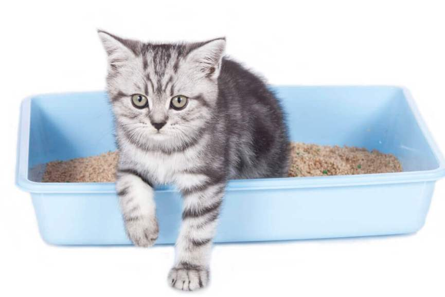 How Often a Cat Uses the Litter Box