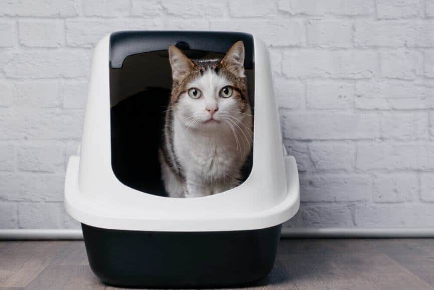 Where to Place the Litter Box