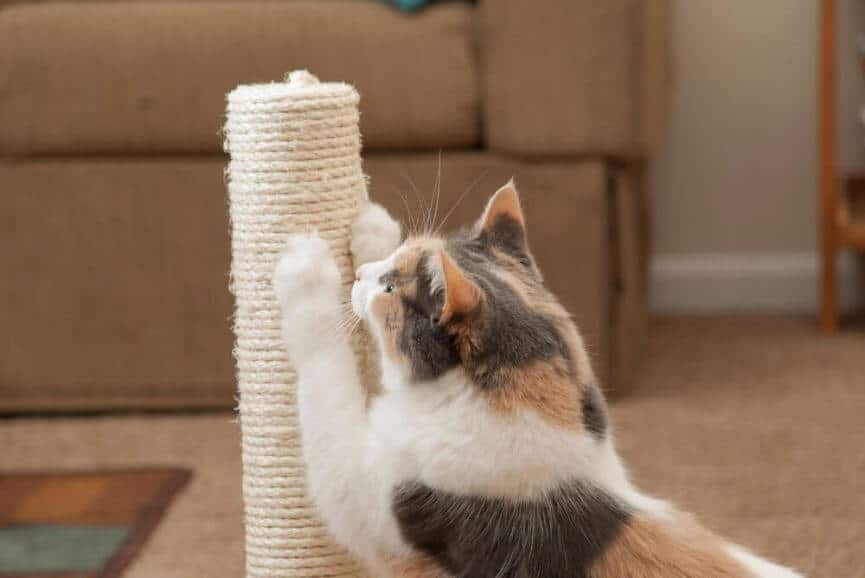 cat scratching post